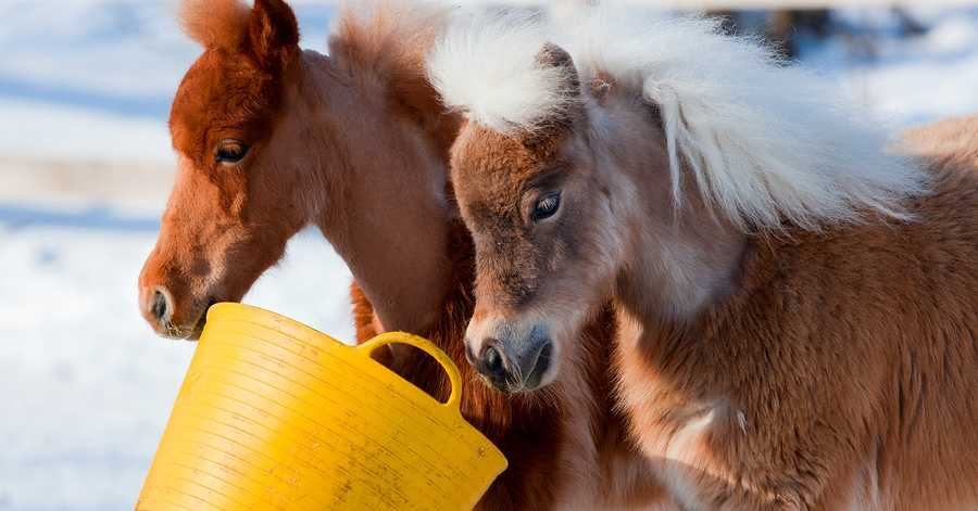 Nutrition for Barefoot Horses
