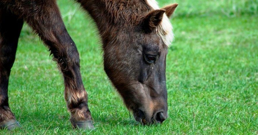 Barefoot Horse Info